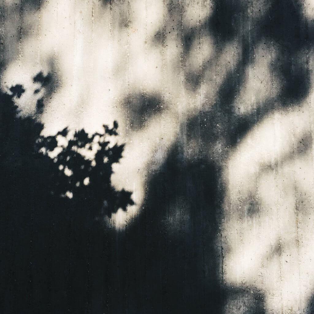 unscharfe Pflanzen in Schwarzweiss