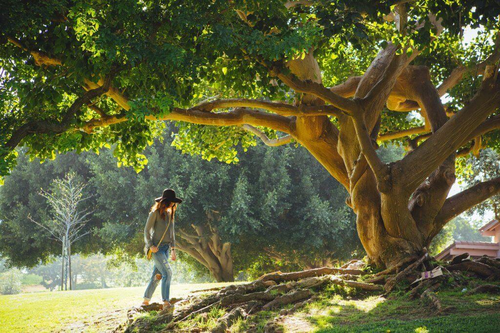 Mensch unter einem großen Baum