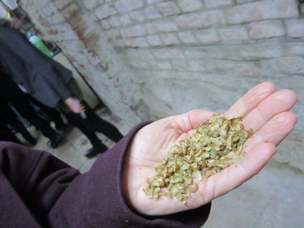 getrocknete Pilzstückchen in einer offenen Hand gehalten