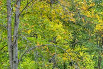 Grüne Bäume am Herbstbeginn